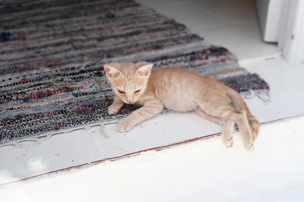 bébé chat grece tapis paros