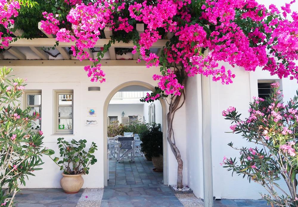 despinas appartements paros naoussa grece