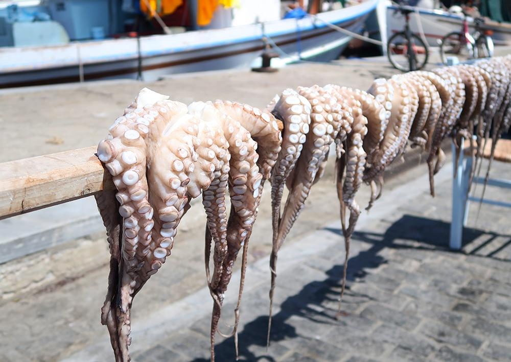 poulpe grece paros