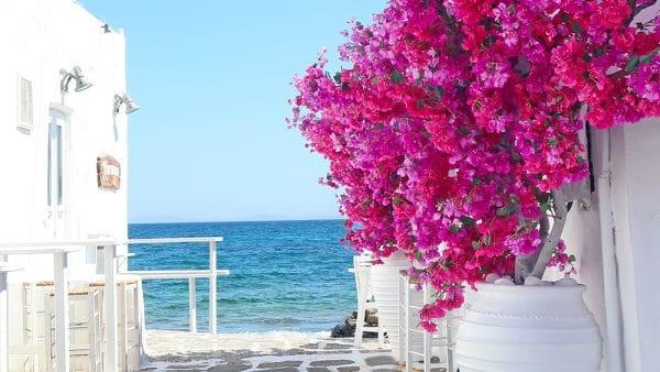 paros grece cyclades voyage bougainvillier