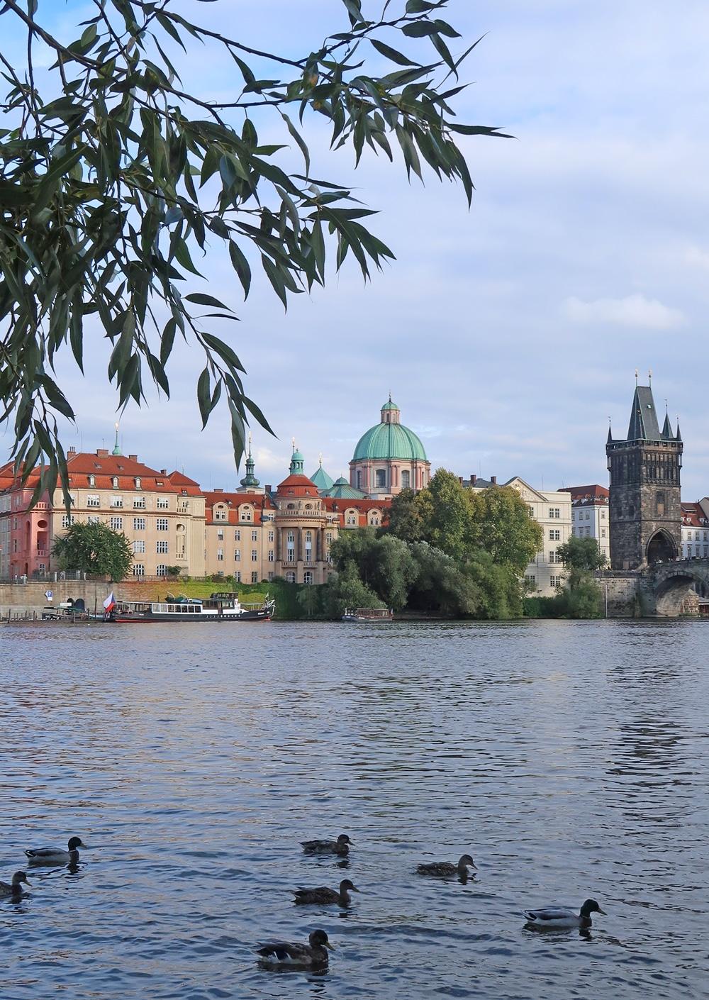 île aux cygnes voyage Prague République Tchèque Europe