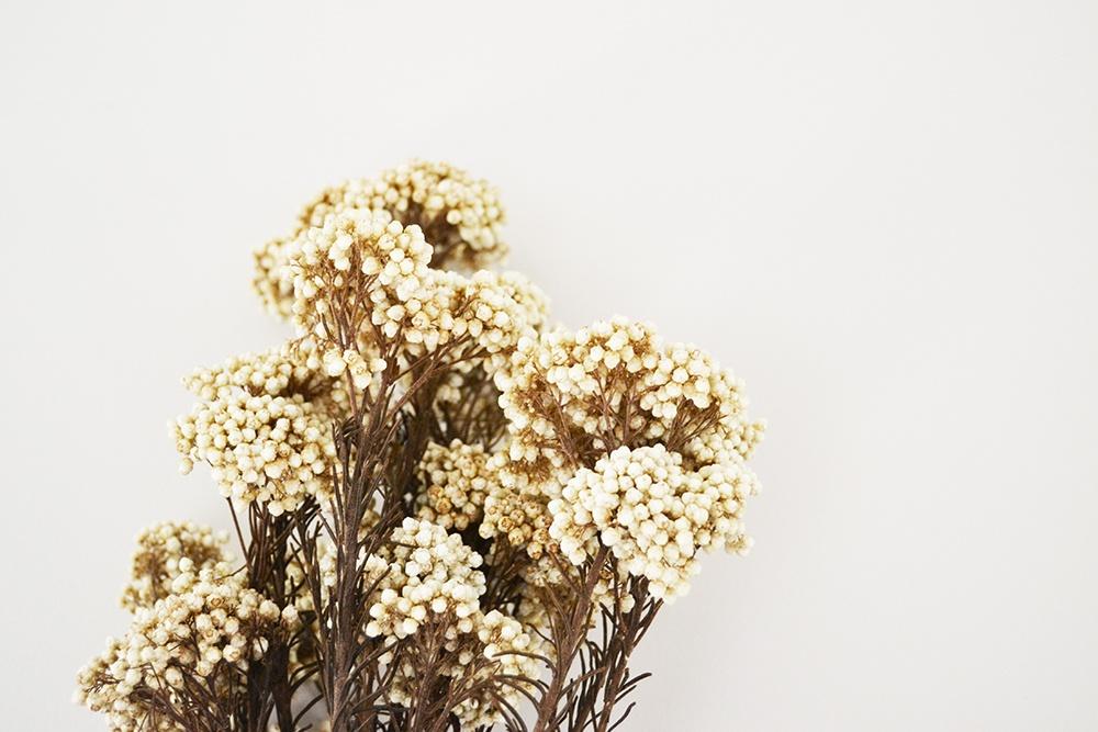 Claire Jaurand Fleuriste decoratrice La Rochelle 13