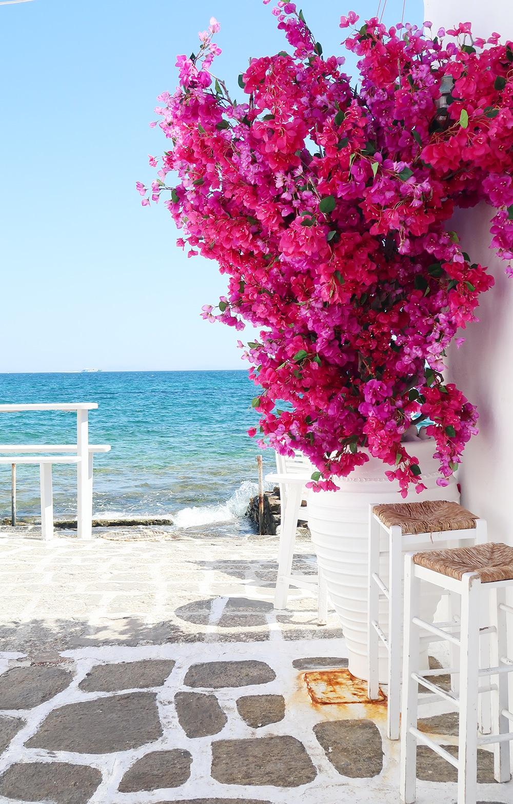 bougainvillier paros iles cyclades grece