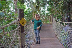 pull vert sapin shein serre aquarium la rochelle tropical