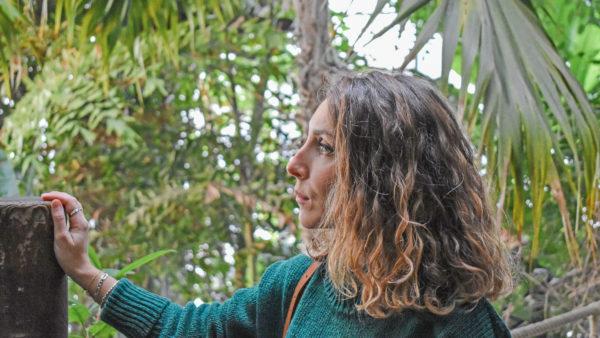 pull vert sapin aquarium la rochelle serre tropicale