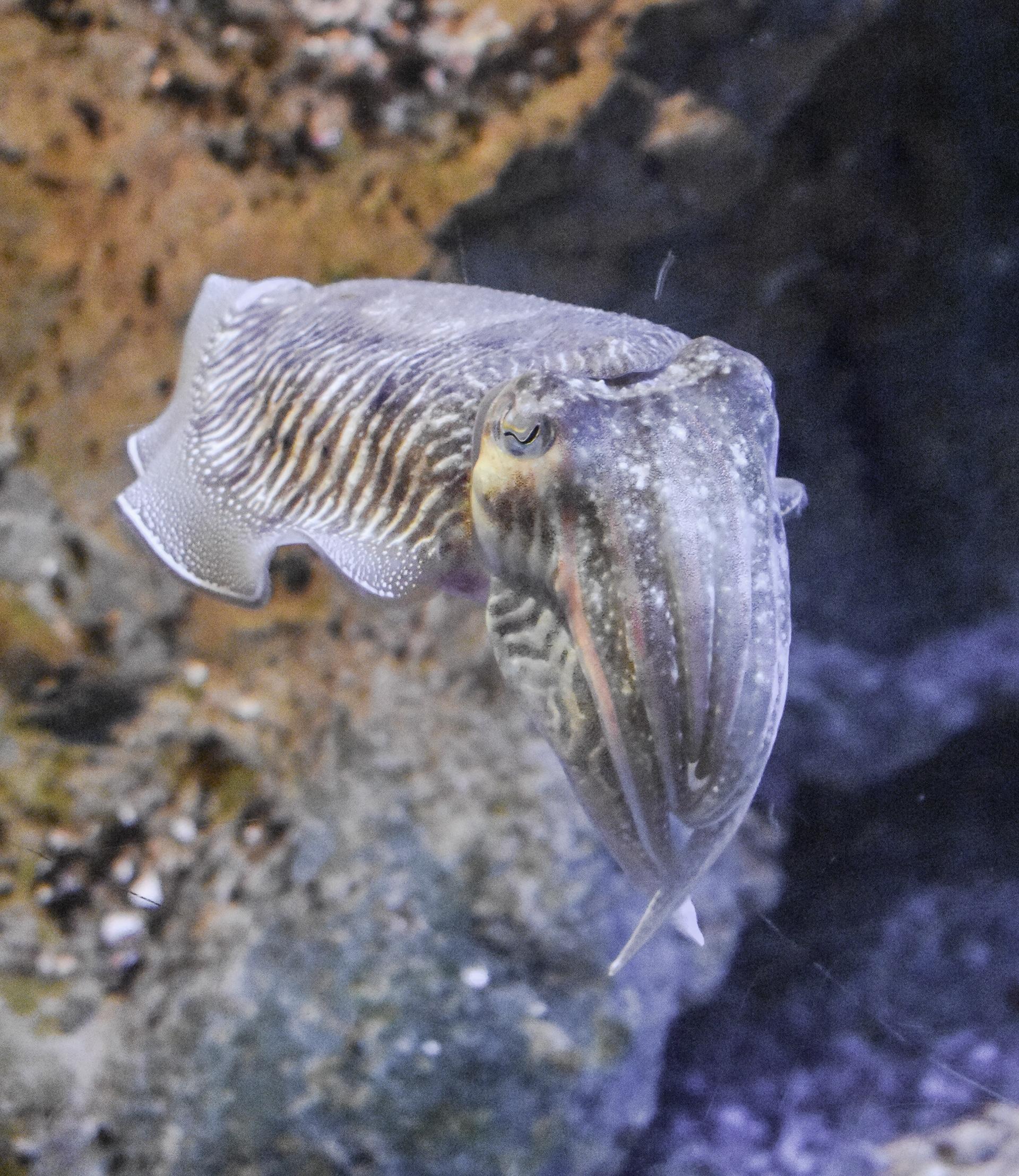 aquarium la rochelle loisirs la rochelle idees de sortie