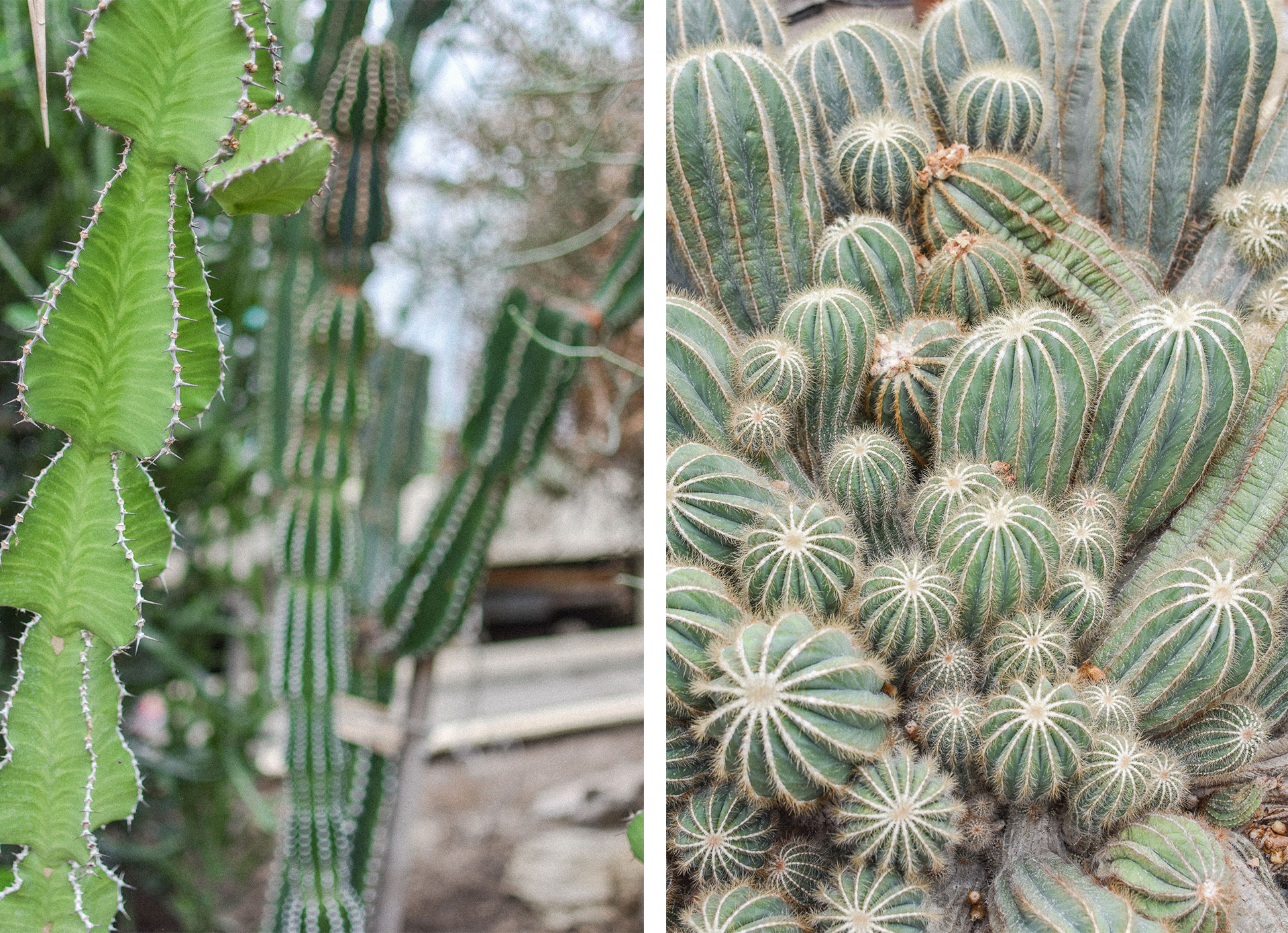 jardin serres auteuil paris cactus tropical